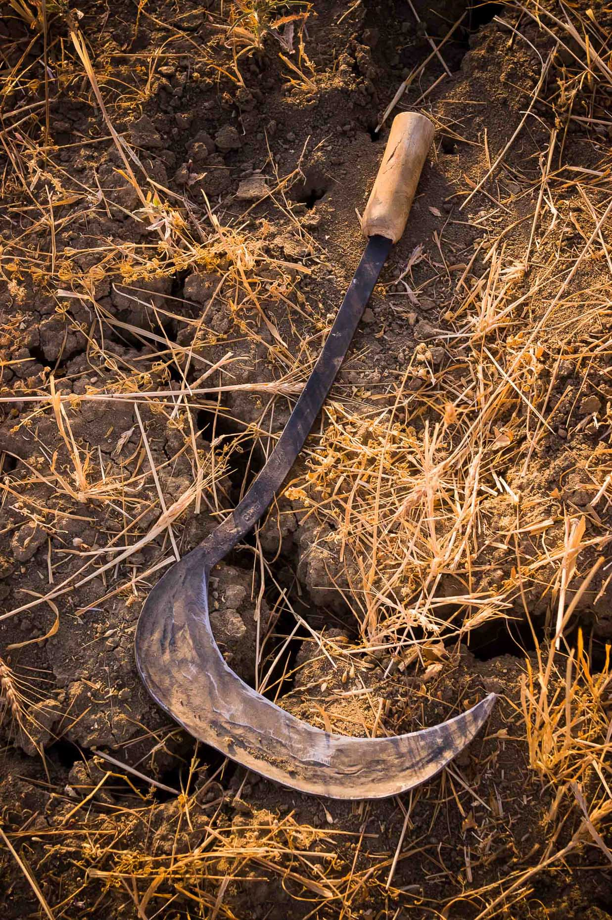 Photo of hand scythe  in warm natural light, Van Turkey.