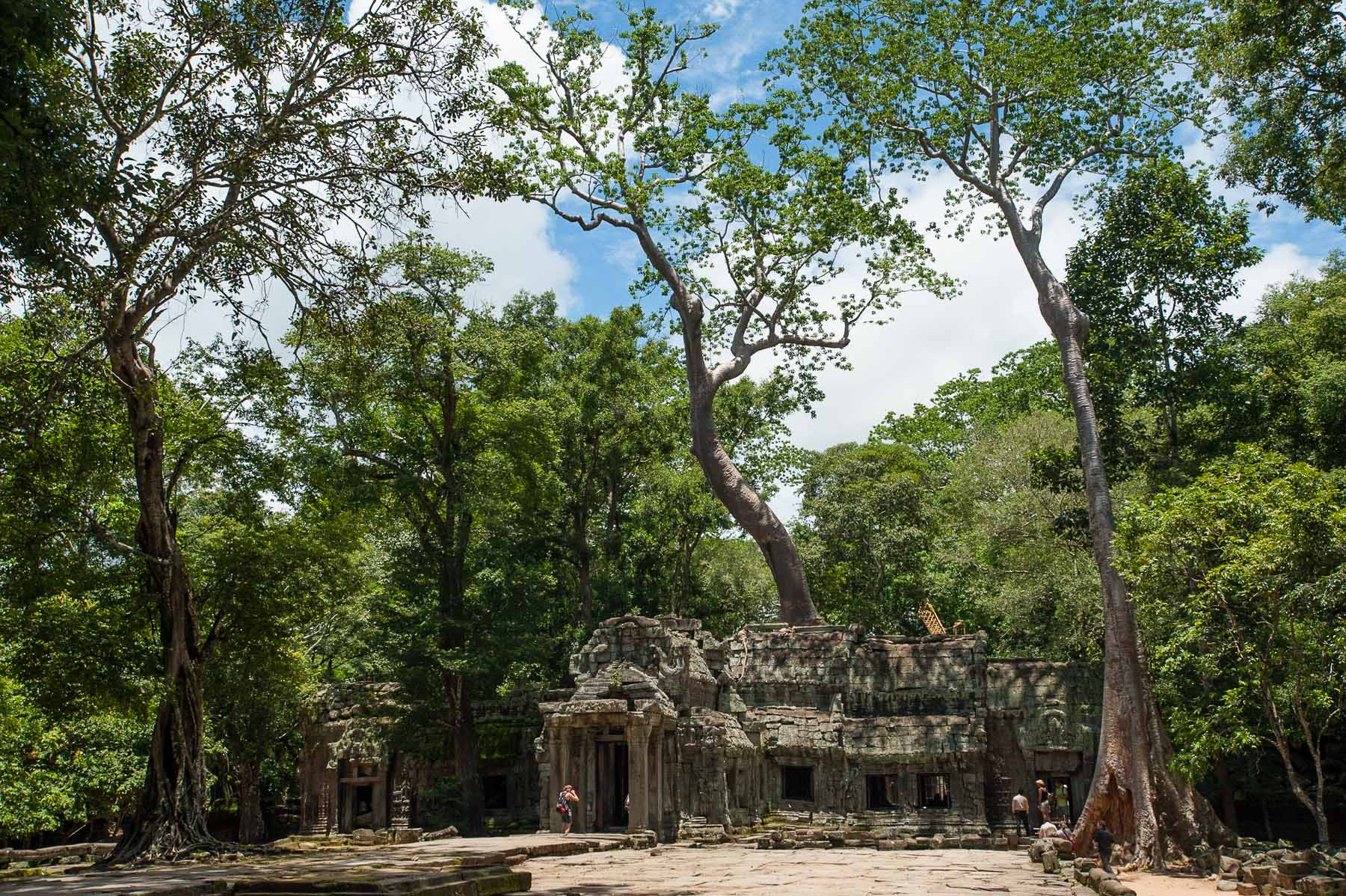 Ta Phrom Temple covered in silk-cotton trees.