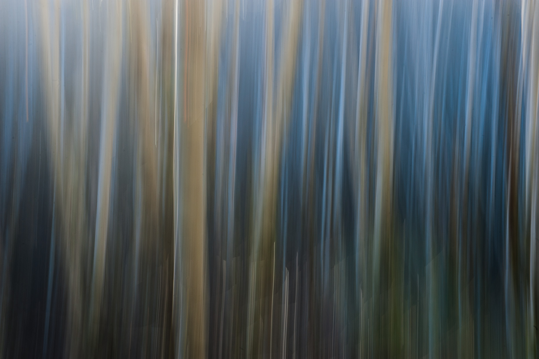 Abstract image of white birch trees with  soft blue and white colors.