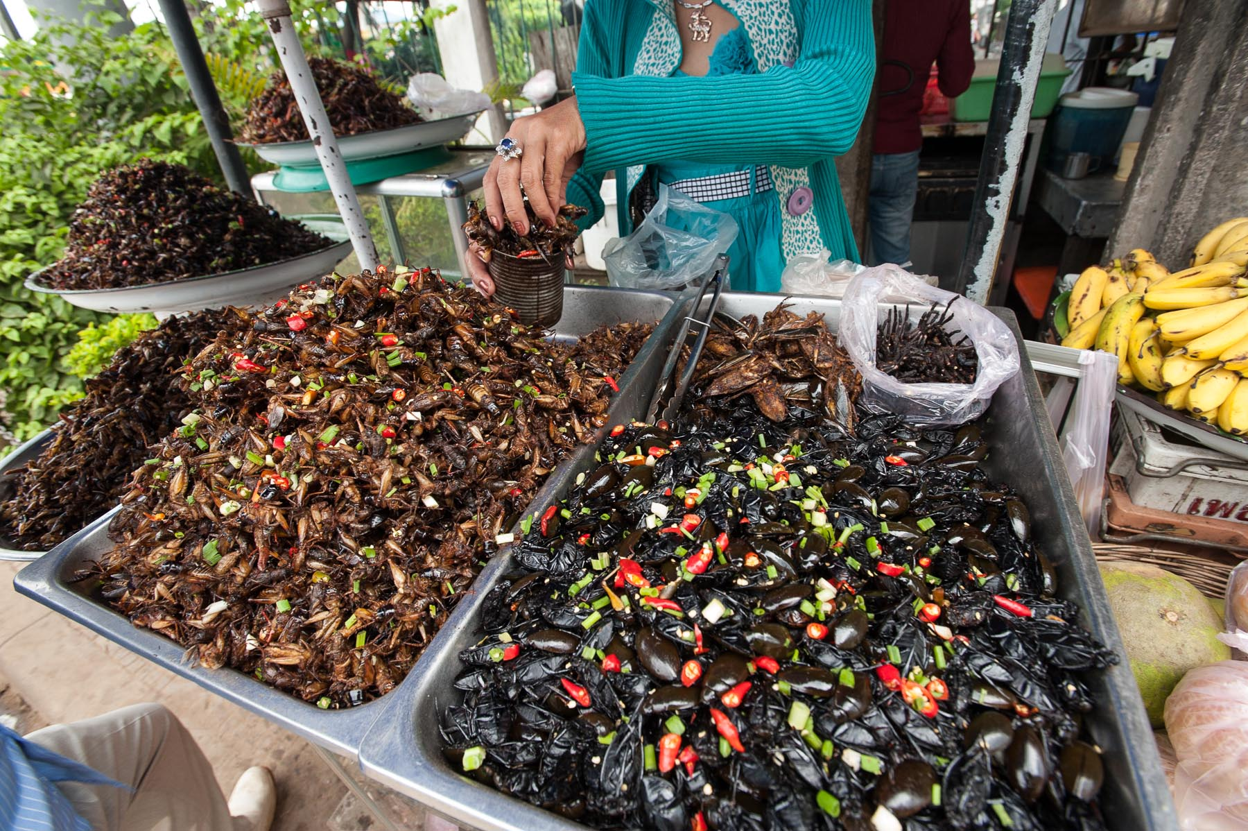 Edible cockroaches and trantulas at open market, Pursat Cambodia.